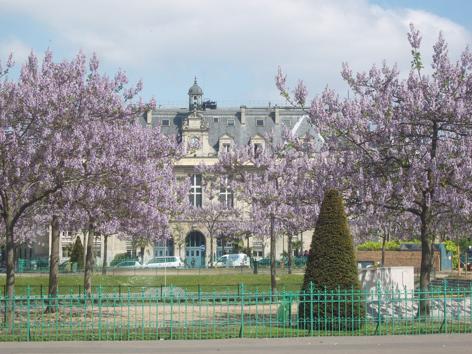 Paris_13e_-_place_d'Italie_-_paulownias_en_fleurs