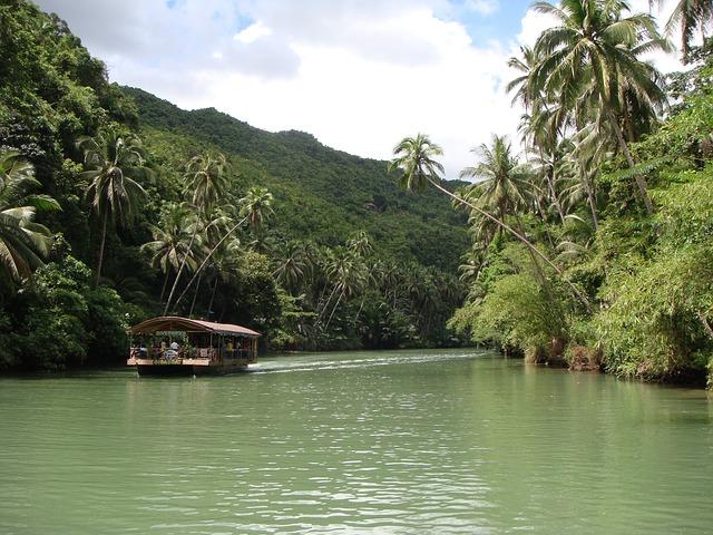 rain-forest-352582_640